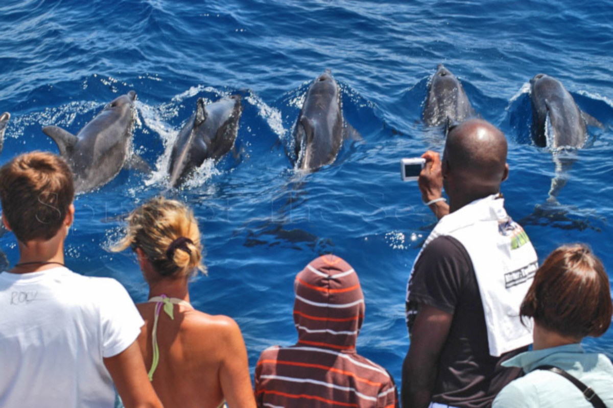 Dolphin search